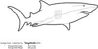 sand tiger shark, Carcharias taurus, illustration by the artist Wyland