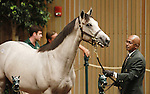 September 09, 2014: Hip #351 Tapit - Trickski colt consigned by Dromoland Farm sold for $700,000 to Robert Baker/William Mack at the Keeneland September Yearling Sale.   Candice Chavez/ESW/CSM
