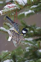 Kohlmeise an der Vogelfütterung, Fütterung im Winter bei Schnee, an Fettfutter in weihnachtlichen Formen, weihnachtlich, selbstgemachtes Vogelfutter, Winterfütterung, Kohl-Meise, Meise, Parus major, great tit