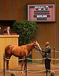 12 September 2010.  Hip #46 Distorted Humor - Half Queen colt, sold for $625,000 at the Keeneland September Yearling Sale.  Consigned by Eatong Sales.