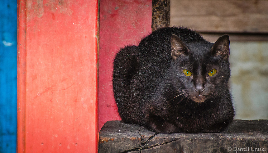 Nature, Photograph of a black cat with piercing green eyes. Taken in Puerto Vallarta, Mexico.