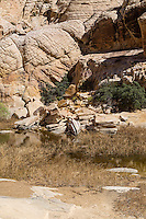 Red Rock Canyon, Nevada.  Calico Tanks at end of Trail.  Sandstone Shows Cross-bedding from ancient Sand Dunes.