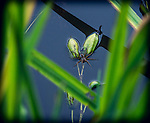 8.24.13 - Spider Web….