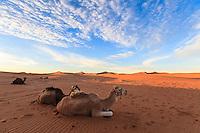 Africa, Marocco,dune of Chegaga,berber bivac at sunrise