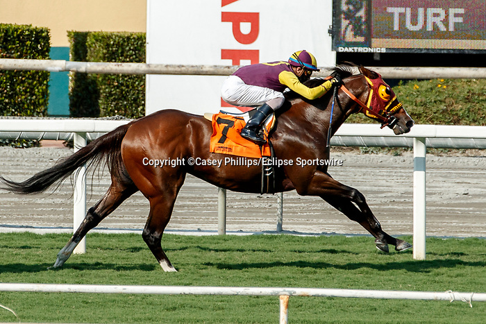 ARCADIA, CA  SEP 25:  #7 Big Runnuer, ridden by Juan Hernandez, in the stretch of the Eddie D Stakes (Grade ll) on September 25, 2020 at Santa Anita Park in Arcadia, CA. (Photo by Casey Phillips/Eclipse Sportswire/CSM.