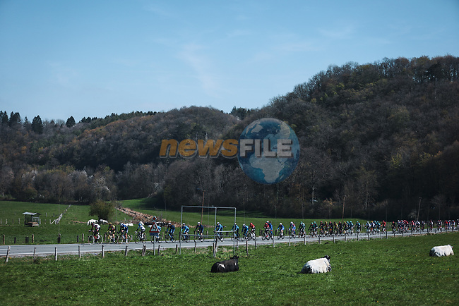 The peloton during the 107th edition of Liege-Bastogne-Liege 2021, running 259.1km from Liege to Liege, Belgium. 25th April 2021.  <br /> Picture: A.S.O./Aurelien Vialatte   Cyclefile<br /> <br /> All photos usage must carry mandatory copyright credit (© Cyclefile   A.S.O./Aurelien Vialatte)