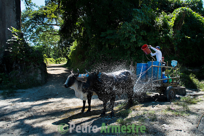 """November 09, 2014. """"Water it´s the real thing""""<br /> Robin Elias has to take water from the river with the help of his animals. The people of Nejapa in El Salvador, have no drinking water because the Coca -Cola company overexploited the aquifer in the area, the most important source of water in this Central American country. This means that the population has to walk for hours to get water from wells and rivers. The problem is that these rivers and wells are contaminated by discharges that makes Coca- Cola and other factories that are installed in the area. The problem can increase: Coca Cola company has expansion plans, something that communities and NGOs want to stop. To make a liter of Coca Cola are needed 2,4 liters of water. ©Calamar2/ Pedro ARMESTRE"""