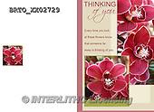 Alfredo, FLOWERS, BLUMEN, FLORES,  photos+++++,BRTOXX02729,#F#