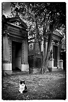 Europe/France/Ile de France/ Paris/75020: Cimetière du père Lachaise : Chat //  Europe / France / Ile de France / Paris / 75020: Père Lachaise cemetery: Cat
