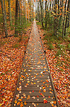 The elevated boardwalk of the Jesup Path in the Sieur de Monts area of Acadia National Park, Mount Desert Island, Maine, USA