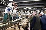 Photo © Tim Gander. All rights reserved. Tel: 07703 124412. Standerwick livestock market, Frome, Somerset.