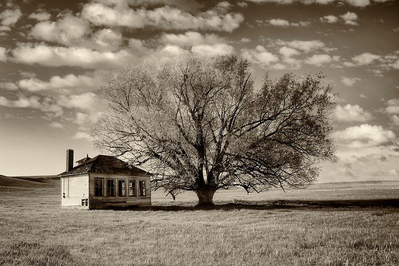 Pioneer Schoolhouse and lone tree in pasture. Near Jordan Valley. Eastern Oregon