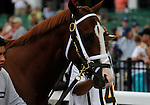 09 August 02: Munnings prior to the grade 1 Haskell Invitational for three year olds at Monmouth Park in Oceanport, New Jersey.
