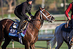 OCT 29 2014:Carpe Diem, trained by Todd Pletcher, exercises in preparation for the Breeders' Cup Juvenile at Santa Anita Race Course in Arcadia, California on October 29, 2014. Kazushi Ishida/ESW/CSM