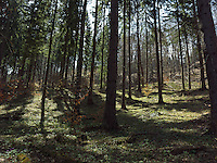FOREST_LOCATION_90210