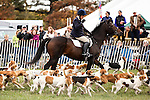 Just before the Genesee Valley Hunt Cup, a parade of the Genesee Valley Hunt Hounds walk down the racing lane during the Genesee Valley Hunt Races on The Nations Farm in Geneseo, New York on October 13, 2012