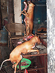 Dog Carcasses being sold for meat in Chinese market