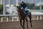 DEC 11,2015: Flintshire ,trained by Andre Fabre,exercises in preparation for the Hong Kong Vase at Sha Tin in New Territories,Hong Kong. Kazushi Ishida/ESW/CSM