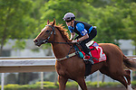 DEC 11,2015: Criterion ,trained by David Hayes,exercises in preparation for the Hong Kong Cup at Sha Tin in New Territories,Hong Kong. Kazushi Ishida/ESW/CSM