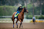 October 22, 2021: Corniche works out in preparation for the Breeders Cup Juvenile at Santa Anita Park in Arcadia, California on October 23, 2021. Evers/Eclipse Sportswire/CSM