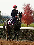Oodnadatta, trained by trainer Mrs. John Harrington, exercises in preparation for the Breeders' Cup Juvenile Fillies Turf at Keeneland Racetrack in Lexington, Kentucky on November 5, 2020.