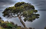 photo was taken Nepean Bay kangaroo island South Australia early one morning