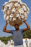 "Asien Suedasien Indien Madhya Pradesh Kasrawad , Arbeiter tragen Baumwolle in Koerben in die Entkernungsfabrik - xagndaz | .South asia Inda Madhya Pradesh Kasrawad , worker carry cotton in baskest in to ginning factory .| [ copyright (c) Joerg Boethling / agenda , Veroeffentlichung nur gegen Honorar und Belegexemplar an / publication only with royalties and copy to:  agenda PG   Rothestr. 66   Germany D-22765 Hamburg   ph. ++49 40 391 907 14   e-mail: boethling@agenda-fototext.de   www.agenda-fototext.de   Bank: Hamburger Sparkasse  BLZ 200 505 50  Kto. 1281 120 178   IBAN: DE96 2005 0550 1281 1201 78   BIC: ""HASPDEHH"" ,  WEITERE MOTIVE ZU DIESEM THEMA SIND VORHANDEN!! MORE PICTURES ON THIS SUBJECT AVAILABLE!!  ] [#0,26,121#]"