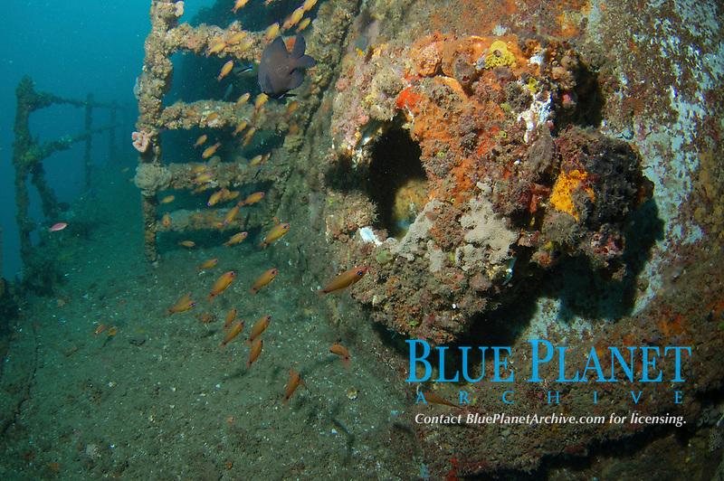 The HMAS Brisbane, navy destroyer sunk as artificial reef, Mooloolaba, Queensland, Australia, South Pacific Ocean