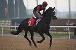 DUBAI,UNITED ARAB EMIRATES-MARCH 23: Kingfisher,trained by Aidan O'Brien,exercises in preparation for the Dubai Gold Cup at Meydan Racecourse on March 23,2017 in Dubai,United Arab Emirates (Photo by Kaz Ishida/Eclipse Sportswire/Getty Images)