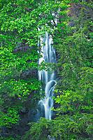 Big Laurel Branch drops into Wilbur Lake (TVA), Big Laurel Branch Wilderness Area, Tennessee