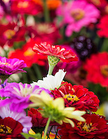 Fresh cut flowers at a farmers market.