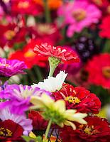 Fresh cut flowers at a farmers market.