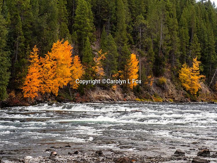 Fall is beautiful in Yellowstone.