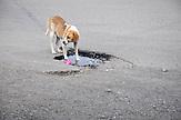 Hund auf der Straße. Plattenbausiedlung in Kutaissi / Street life with dog in kutaisi nearby industrialized apartment blocks.