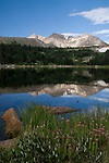Lost Lake, Rowe Mountain, reflection, water, Rosecrown, wildflower, shore, high elevation, subalpine, forest, landscape, back country, nature, summer, August, morning, Rocky Mountain National Park, Colorado, USA