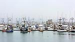 Westport Harbor, Washington.  Commercial fishing fleet lies at dockside on Washington State's pacific ocean coast.