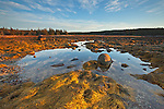 Low tide reveals rockweed and boulders in Merchant Cove, Isle au Haut, Acadia National Park, ME