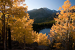 fall, color, aspen, Populus tremuloides, trees, forest, mountains, landscape, scenic, September, morning, above Bear Lake, Rocky Mountain National Park, Colorado, Rocky Mountains, USA