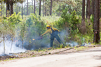 Florida Park Service staff execute a prescribed burn in the pine flatwoods of Highlands Hammock State Park in Sebring, Florida.  Prescribed burns are used periodically to keep invasive species, such as Cogon grass, in check.