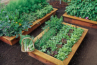 Raised bed salad garden with lettuces, radishes, shallots and parsley.