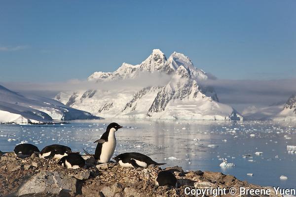 Petermann Island, Antarctic Peninsula, November 2007