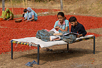 INDIA Madhya Pradesh , harvest and drying of red chilies at farm, children sitting on bed and doing their school homework / INDIEN, Ernte und Trocknung von roten Chilies, Kinder machen ihre Schulhausaugaben