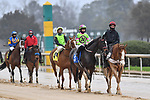 February 27, 2021: #3, Amy's Challenge in the post parade for the Spring Fever Stakes at Oaklawn Park in Hot Springs, Arkansas. Ted McClenning/Eclipse Sportswire/CSM