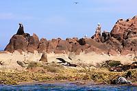 America,Mexico,Baja California,sea lion,Complejo insular Espiritu Santo