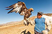 Asia Mongolia, Altai mountain,Saikhsai, child of he hunter Saelikhan around their ger with the Golden Eagle