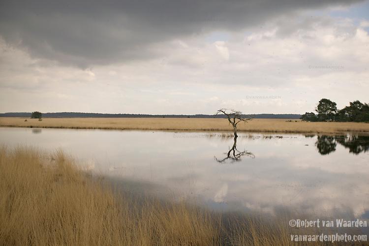Landscape of the Hoge de Veluwe National Park in the Netherlands.
