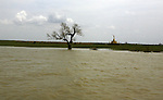 A tree is seen with his trunk submerged under water at  Irrawaddy Division, May 10, 2008. Despairing survivors in Myanmar awaited emergency relief on Friday, a week after 100,000 people were feared killed as the cyclone roared across the farms and villages of the low-lying Irrawaddy delta region. The storm is the most devastating one to hit Asia since 1991, when 143,000 people were killed in neighboring Bangladesh. Photo by Eyal Warshavsky  *** Local Caption *** ëì äæëåéåú ùîåøåú ìàéì åøùáñ÷é àéï ìòùåú áúîåðåú ùéîåù ììà àéùåø