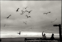 Feeding seagulls from end of pier<br />