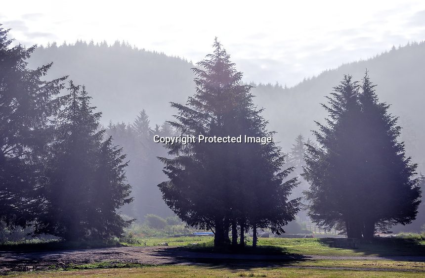 Shadowed trees in the morning sun at Makah Indian Reservation, WA.