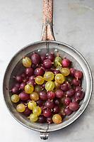 Gastronomie Générale /  Diététique / Groseille à maquereau bio // General Gastronomy / Diet / Organic gooseberry